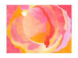 Cabbage Rose III Prints by Carolyn Roth