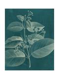 Modern Botany II Print by Vision Studio