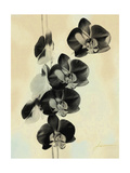 Orchid Blush Panels III Art by James Burghardt