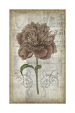 French Floral IV Prints by Jennifer Goldberger
