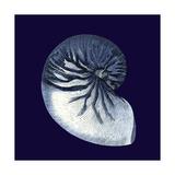 Vision Studio - Indigo Shells VII - Poster