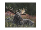 Recumbent Moose Prints by Kevin Daniel