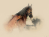 Horse Portrait X Photographic Print by David Drost