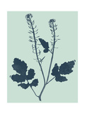 Indigo and Mint Botanical Study I Print by  Vision Studio