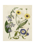 Garden Pairings V Print by Sydenham Edwards