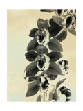 Orchid Blush Panels IV Posters by James Burghardt