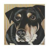 Dlynn's Dogs - Ginger Posters by Dlynn Roll