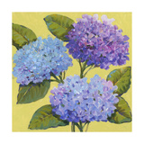 Spring Hydrangeas I Art by Tim O'toole