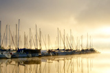 Marina Morning I Photographic Print by Danny Head