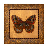 Crackled Butterfly - Fritillary Posters by Wendy Russell