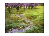Summer Path Giclee Print by Chris Vest