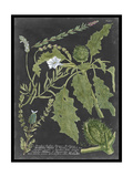 Dramatic Weinmann Greenery II Prints by Vision Studio