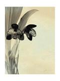 Orchid Blush Panels I Prints by James Burghardt
