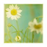 Flores blancas IV Reproducción por Jennifer Jorgensen