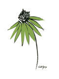 Graphic Cone Flower I Posters by Deborah Velasquez