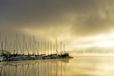 Marina Morning II Photographic Print by Danny Head