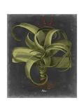 Besler Dramatique IV Prints by  Vision Studio