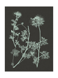Mint and Charcoal Nature Study IV Posters by Vision Studio