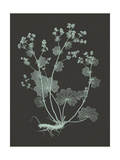 Mint and Charcoal Nature Study I Posters by Vision Studio