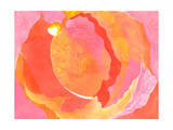 Cabbage Rose I Prints by Carolyn Roth