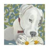 Dlynn's Dogs - Patch Prints by Dlynn Roll