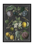 Orchard Varieties IV Prints by  Vision Studio