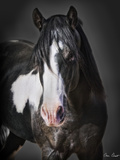 Horse Portrait II Photographic Print by David Drost