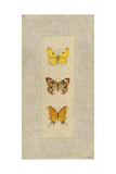 Butterfly Trio I Premium Giclee Print by Wendy Russell