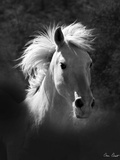 Horse Portrait V Photographic Print by David Drost