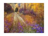 Lost Canyon Larkspurs II Kunstdrucke von Chris Vest