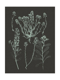 Mint and Charcoal Nature Study III Prints by Vision Studio