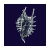 Indigo Shells VI Kunstdrucke von  Vision Studio