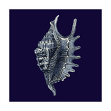 Indigo Shells VI Prints by  Vision Studio