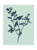 Indigo and Mint Botanical Study VII Prints by  Vision Studio