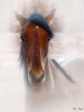 Horse Portrait I Photographic Print by David Drost