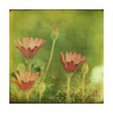 Dream in Pink IX Poster by Jennifer Jorgensen