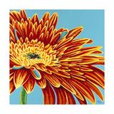 Color Bursts I Premium Giclee Print by Carolee Vitaletti