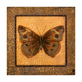 Crackled Butterfly - Buckeye Prints by Wendy Russell