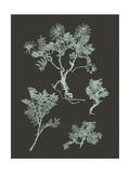 Mint and Charcoal Nature Study II Print by Vision Studio