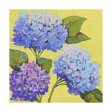 Spring Hydrangeas II Posters by Tim O'toole