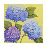 Spring Hydrangeas II Giclee Print by Tim O'toole