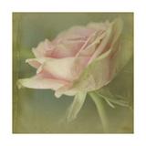 Dream in Pink VI Giclee-tryk i høj kvalitet af Jennifer Jorgensen