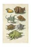 Conch Shell Illustre Art by  Vision Studio