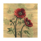 Anemone on Wood Premium Giclee Print by Wendy Russell