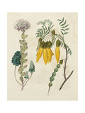 Garden Pairings IV Prints by Sydenham Edwards