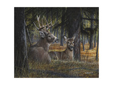 Autumn Royalty Premium Giclee Print by Kevin Daniel