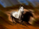 Blazing Horse III Photographic Print by David Drost