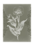 Floral Relief II Prints by Jennifer Goldberger