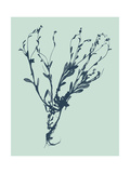 Indigo and Mint Botanical Study VI Print by  Vision Studio