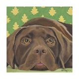 Dlynn's Dogs - Casey Prints by Dlynn Roll